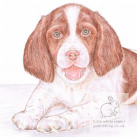 Ginny the Springer Spaniel - Blank Card
