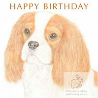 Maisie the Cavalier - Birthday Card