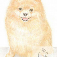 Poppy the Pomeranian - Blank Card