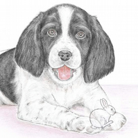 Sally the Springer Spaniel - Blank Card