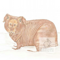Dixon the Skinny Pig - Blank Card