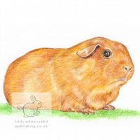 Goldie the Guinea Pig - Blank Card