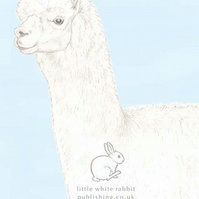 Patrick the Alpaca - Blank Card