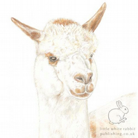 Matthew the Alpaca - Blank Card