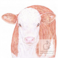 Hereford Calf - Blank Card
