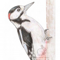 Woodpecker - Blank Card