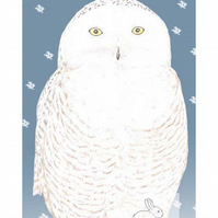 Snowy Owl - Birthday Card