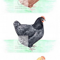 Three Hens - Birthday Card