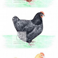 Three Hens - Blank Card