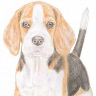 Betty the Beagle - Birthday Card
