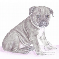 Max the Staffy - Blank Card