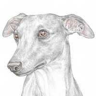 Jim the Whippet - Birthday Card