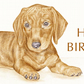 George the Dachshund - Birthday Card