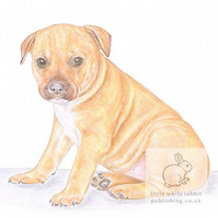 Cookie the Staffy - Blank Card