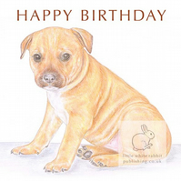 Cookie the Staffy - Birthday Card