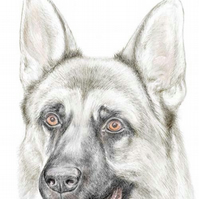 Shadow the German Shepherd - Birthday Card