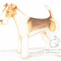Bob the Fox Terrier - Blank Card