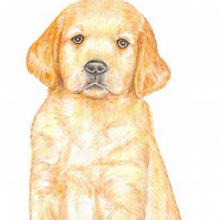 Dexter the Golden Retriever Puppy - Birthday Card