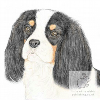 Dolly the Cavalier -  Blank Card