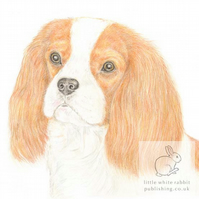 Maisie the Cavalier - Blank Card