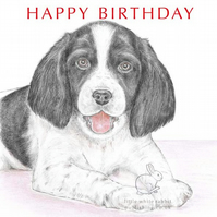 Sally the Springer Spaniel - Birthday Card