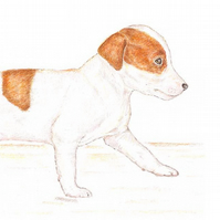 Jill the Jack Russell - Blank Card