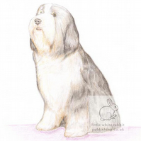 Sophie the Bearded Collie - Blank Card