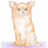 Polly the Chihuahua - Blank Card