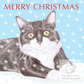 MIittens the Cat - Christmas Card