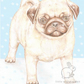 Titus the Pug - Christmas Card