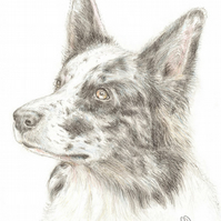 Nixi the Border Collie -  Father's Day Card