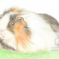 Gus the Guinea Pig - Blank Card