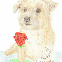 Muffin the Little Dog - Valentine Card