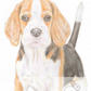 Betty the Beagle - Mother's Day Card
