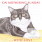 MIittens the Cat - Mother's Day Card