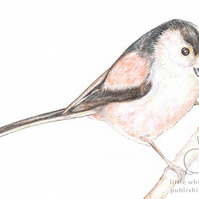 Long-tailed Tit - Thank You Card