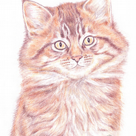 Moppet the Kitten -  Thank You Card