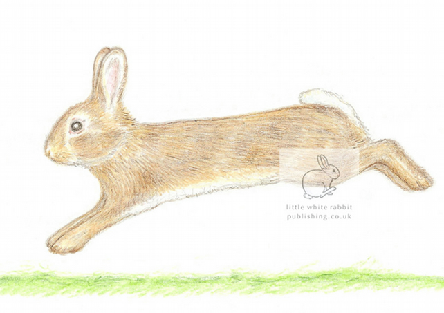 Little Wild Rabbit Jumping - Blank Card
