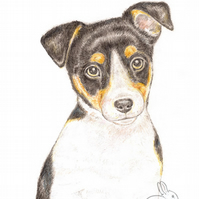 Jack the Jack Russell - Thank You Card