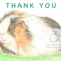 Gus the Guinea Pig - Thank You Card