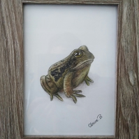 Hand drawn framed frog wall art