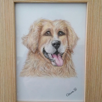 Hand drawn framed golden Retriever wall art