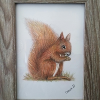 Hand drawn framed red squirrel wall art