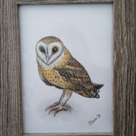 Hand drawn framed owl wall art