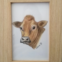 Hand drawn framed Jersey Cow wall art