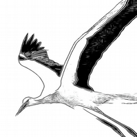Larger Greeting Card, Stork  210 x 148 mm, 8.27 x 5.83 inches Giclée