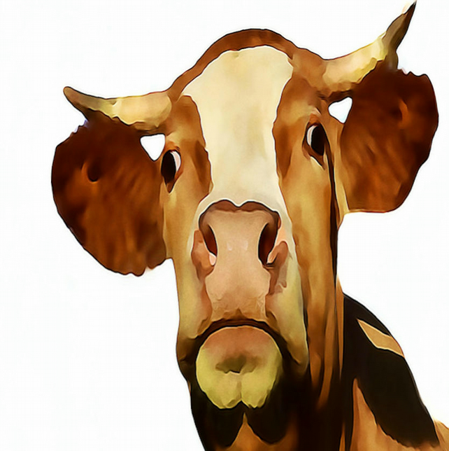 Cow Head Funny Card, Birthday, Greeting Cards 210 x 148 mm or 8.27 x 5.83 inches