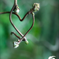 Love naturally (greeting card featuring a photo of a natural heart)