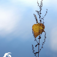 Single leaf heart (greeting card featuring a single leaf in the shape of a heart
