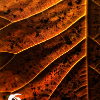 Leafscape 2 (greeting card featuring photo of a detail of a leaf)